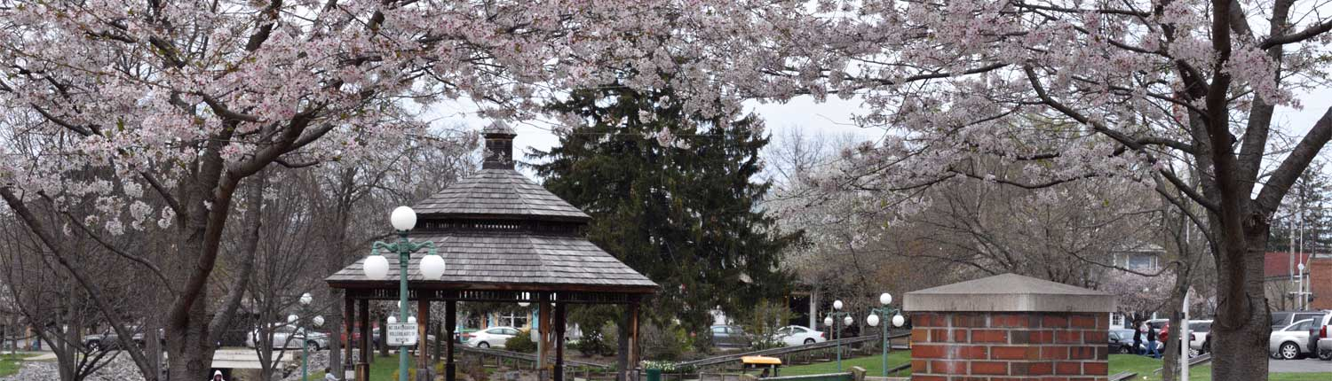 Hufnagle Park Blossoming Trees